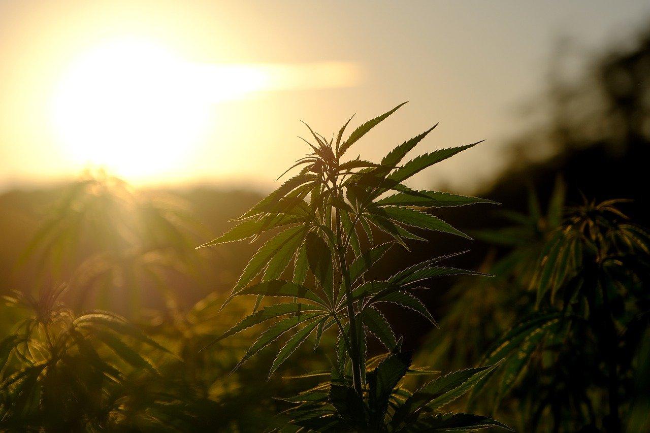 cannabis pyrenees faits divers